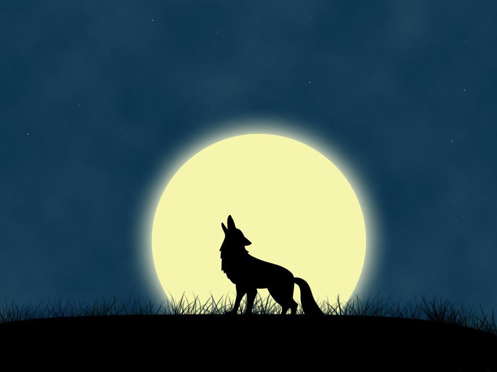 Lobo Lua Cheia Mar De Historias